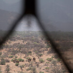 Elephants thtough the mesh screen at Sasaab, Samburu