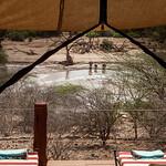 View from room at Sasaab