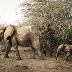 Mother plus baby elephant